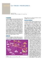 La Vescica Neurologica – Giulio Del Popolo